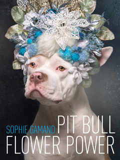 PIT BULL FLOWER POWER